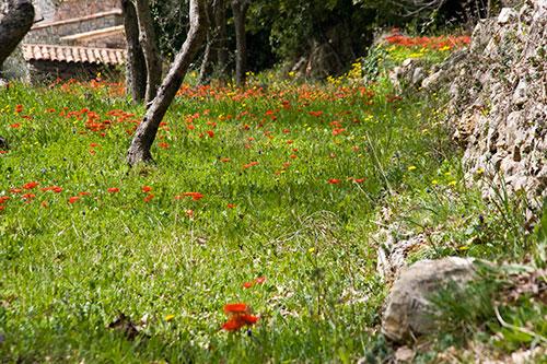 Pit Aretz: Blumen Bergeris